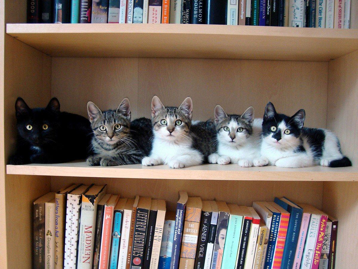 Картинки по запросу котики читают