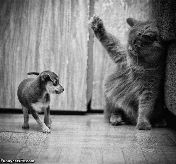 кошек с котятами смешные