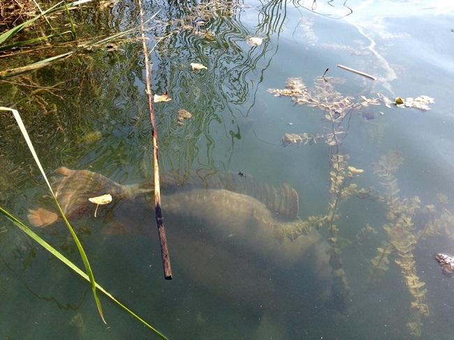 весенняя рыбалка на что лучше ловить