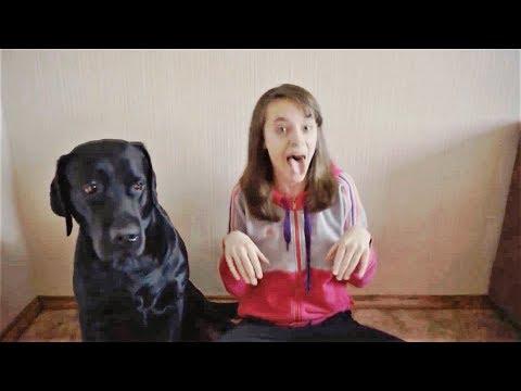 Приколы с Животными 2018 Смешные СОБАКИ Лучшие Приколы про собак ПОДБОРКА ПРИКОЛОВ