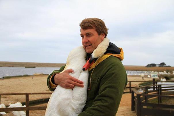 Этот прекрасный лебедь обнял человека в благодарность за спасение