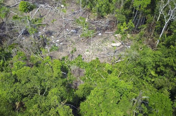 Обнаружено неизвестное ранее племя Амазонки