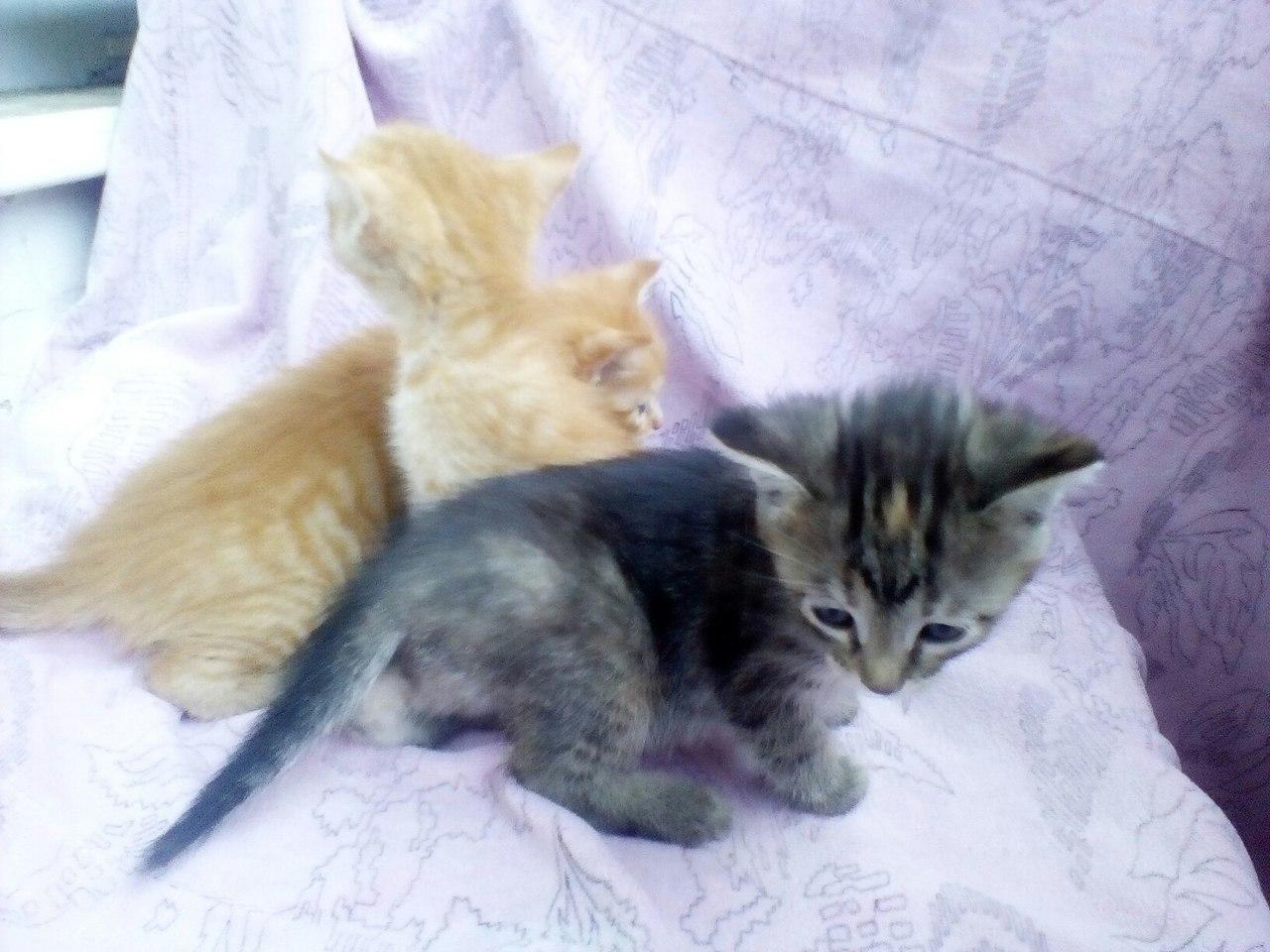 Котята и кошка ищут добрые руки