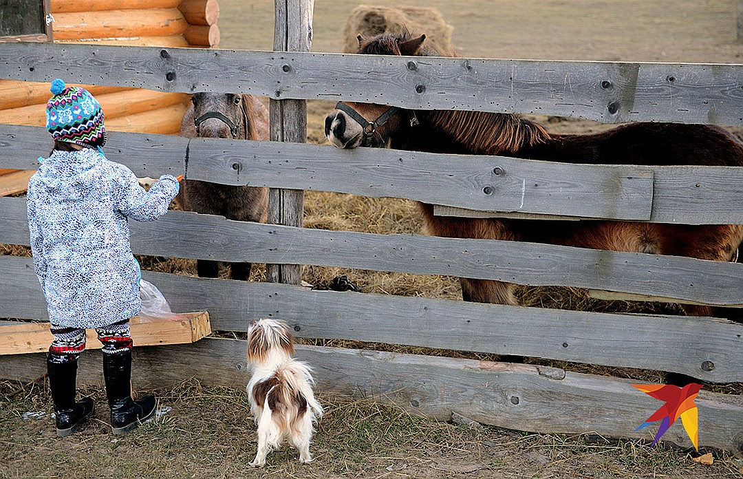 Гостей усадьбы угощают продуктами местной фермы. Фото: Дмитрий СТЕШИН