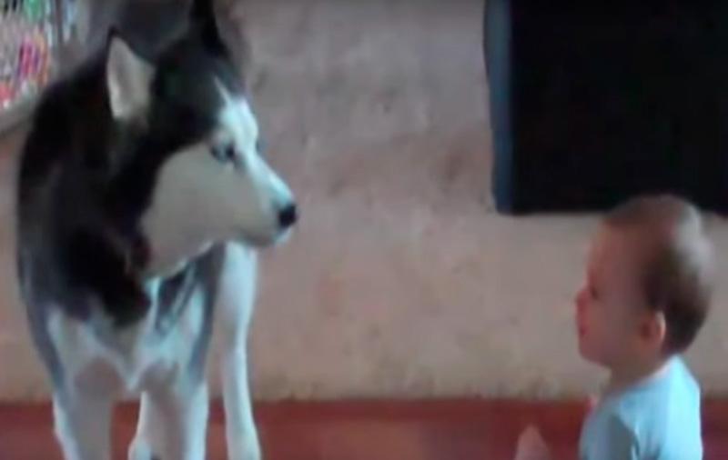 Этот малыш понимает по-собач…