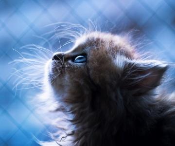 Самый красивый на свете котёнок