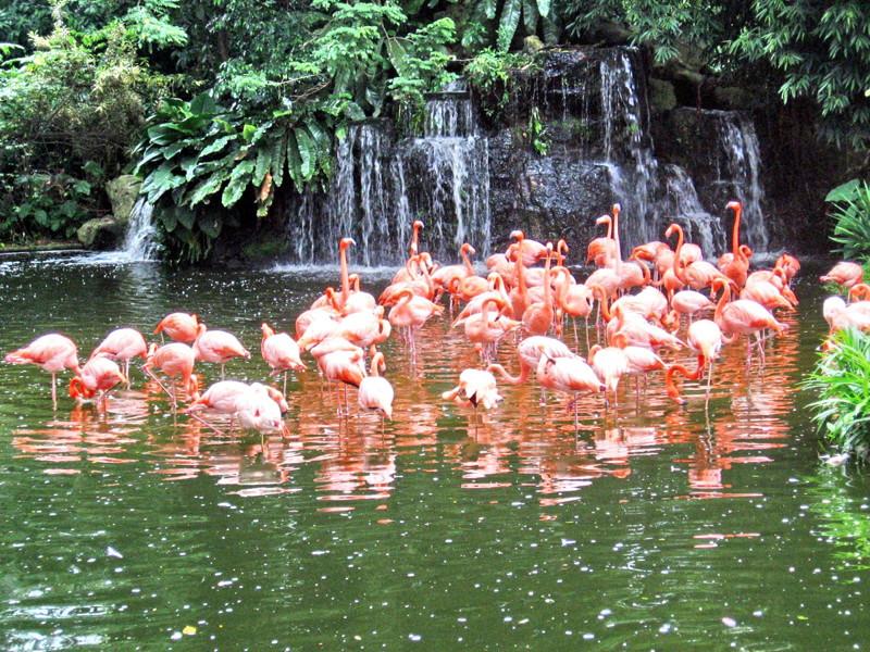Парк птиц «Джуронг» в Сингапуре