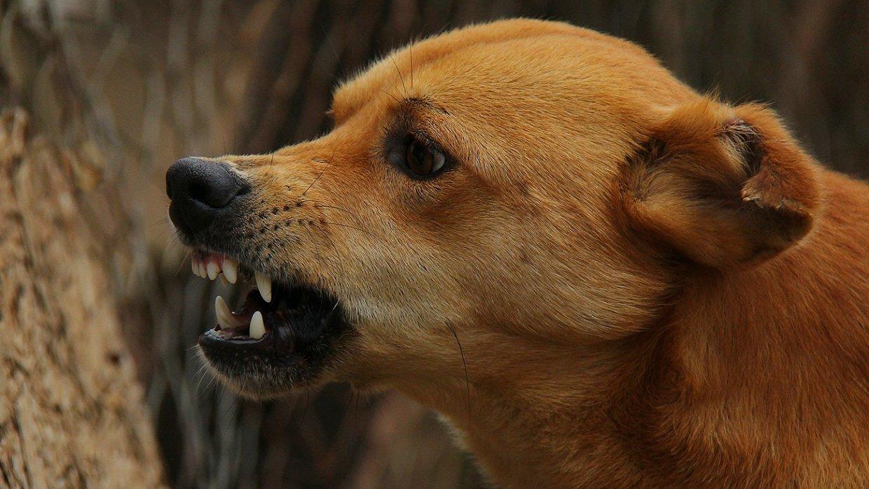 Собака загрызла полуторагодо…