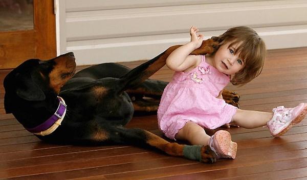 Девочка играла с доберманом, но вдруг, собака оскалилась на девочку, зарычала и схватила ее…