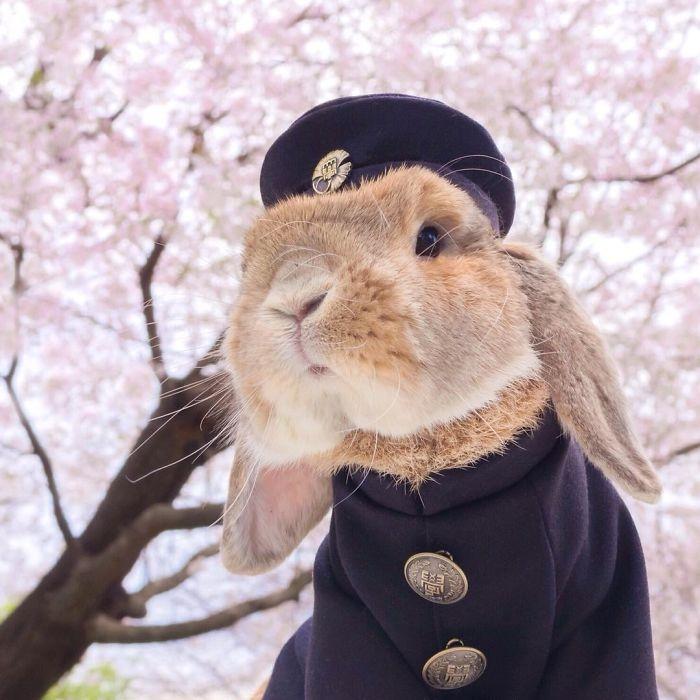 PuiPui — самый стильный кролик во всём интернете