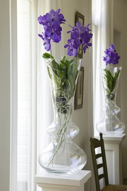 Орхидеи: лучшие сорта и уход