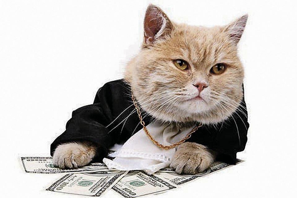 Итальянский кот получил в наследство 30 тысяч евро