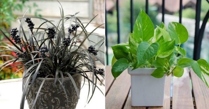 НАСА опубликовало список лучших комнатных растений для очистки воздуха. Хотя бы одним стоит обзавестись