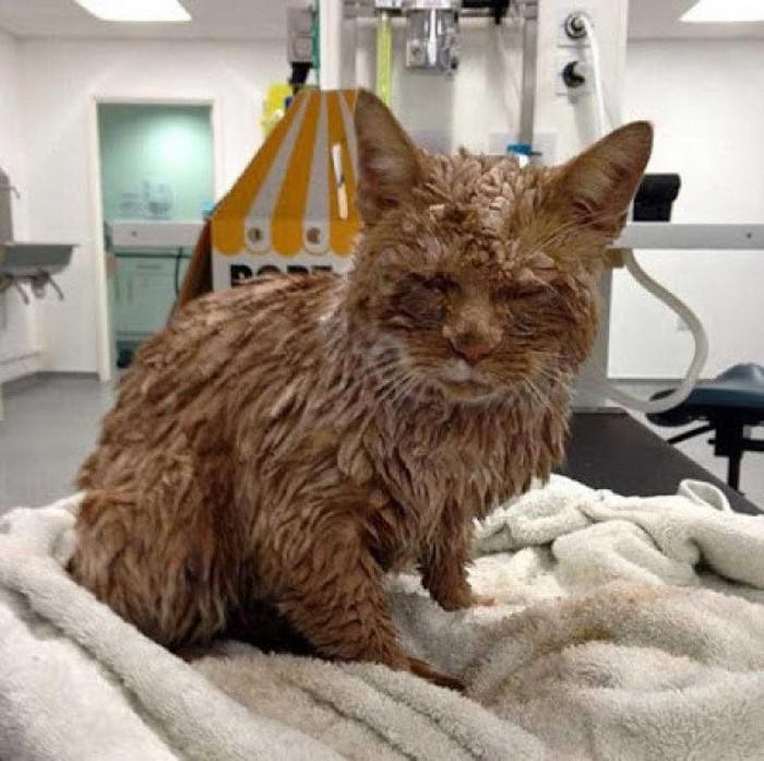 После осмотра этого кота ахнули даже врачи. У людей оставался один-единственный выход...