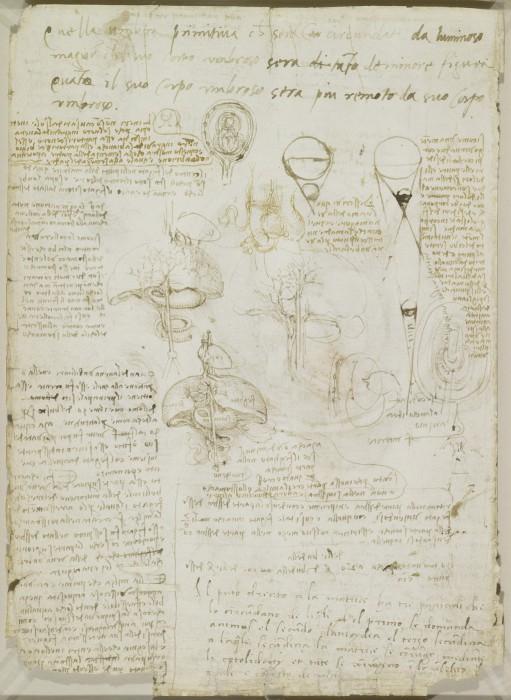 Человеческая анатомические в эскизах Леонардо да Винчи.