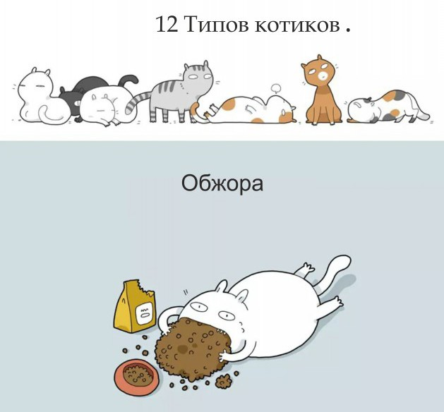 Кот играющий картинки