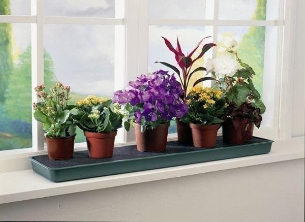 Лучшие растения в спальне от бессонницы