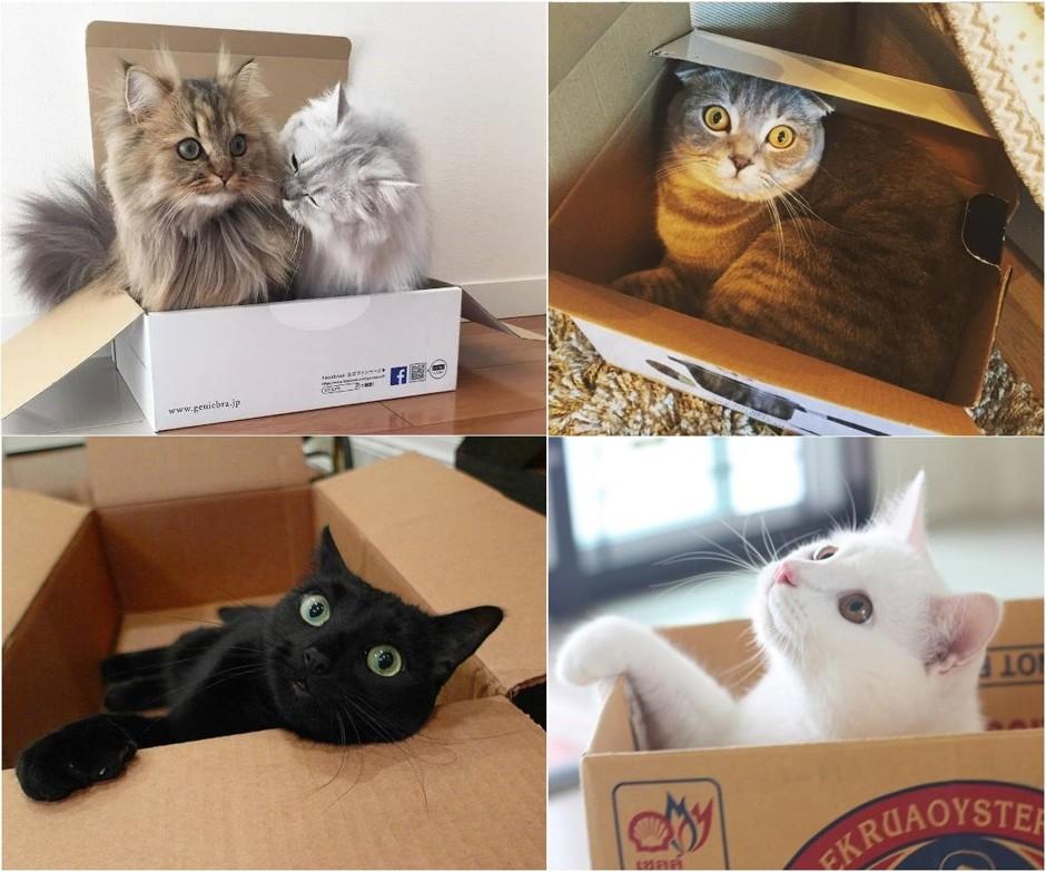 Нашли место: куда любят прятаться коты и кошки