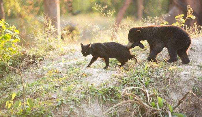 Медвежонок, который не должен был родиться, обрел друга-кота