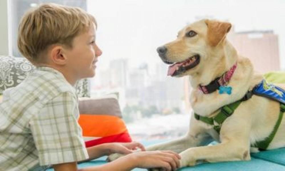 Животные обладают удивительным даром исцеления людей
