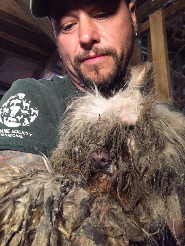 Невероятное преображение испуганной собаки с мясной фермы