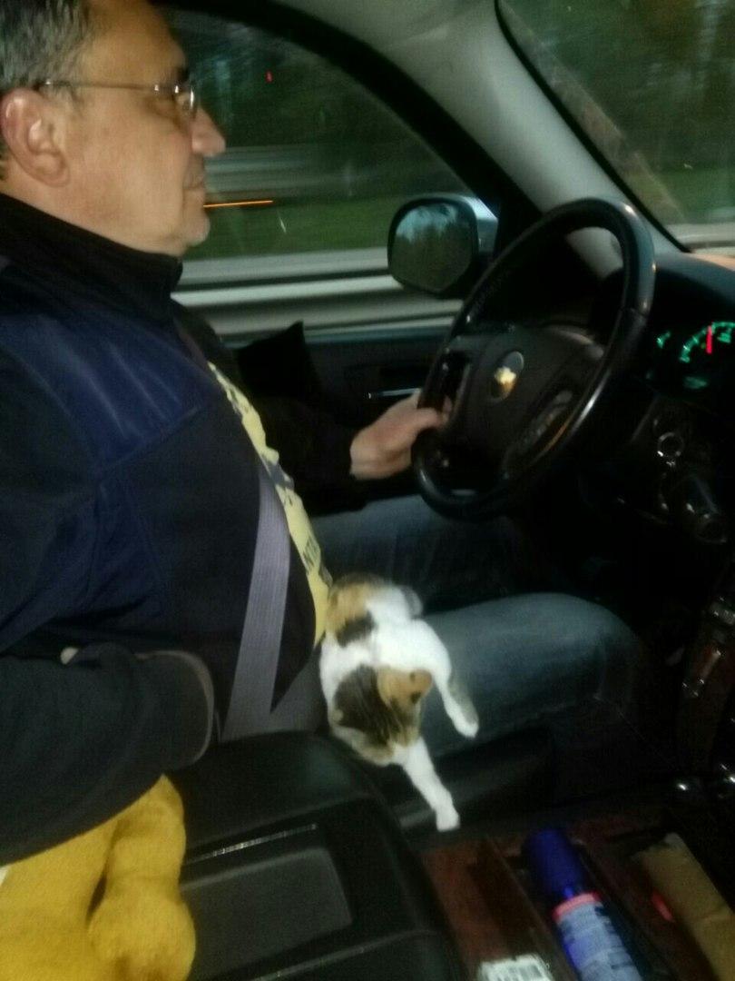 Из Астрахани в Москву с подобранным котенком