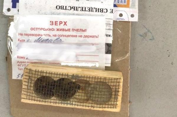 Живых пчел из столицы Адыгеи в Москву доставили почтой