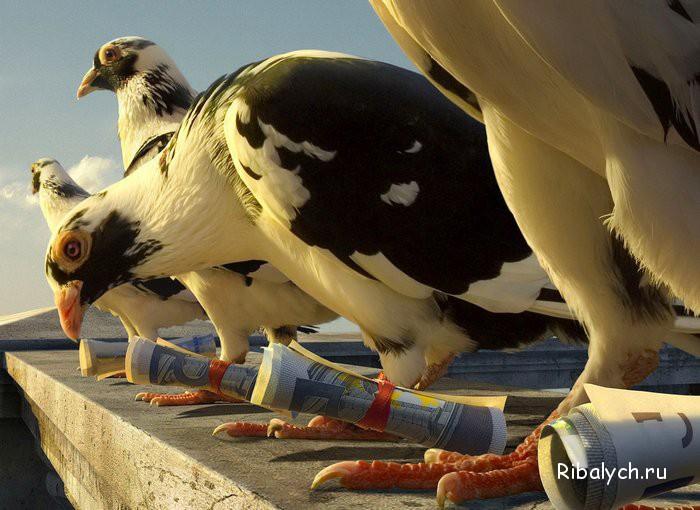 Птицы-фотографы