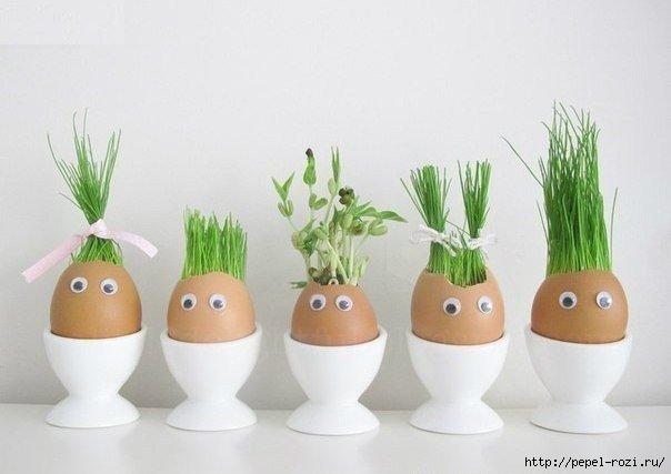 Огород в яичных скорлупках