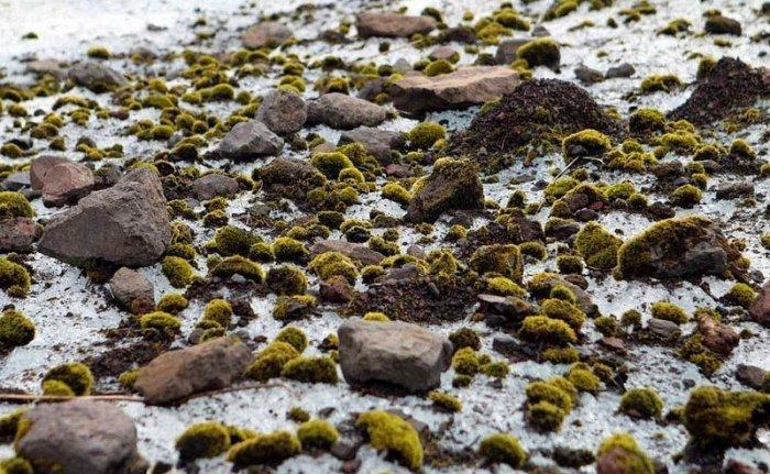 Ледниковые мыши – дом живых организмов