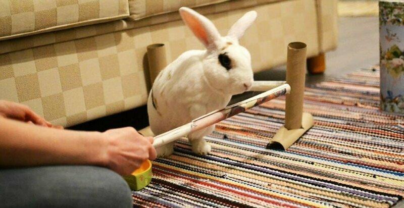 Кролик выполнил 20 трюков за минуту и попал в Книгу рекордов Гиннесса