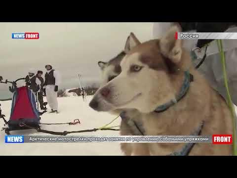 Арктические мотострелки проходят занятия по управлению собачьими упряжками
