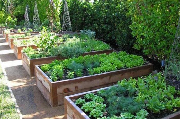 Очень удобно посадить овощи по мере их созревания, что сделаем более практичным работу в саду.