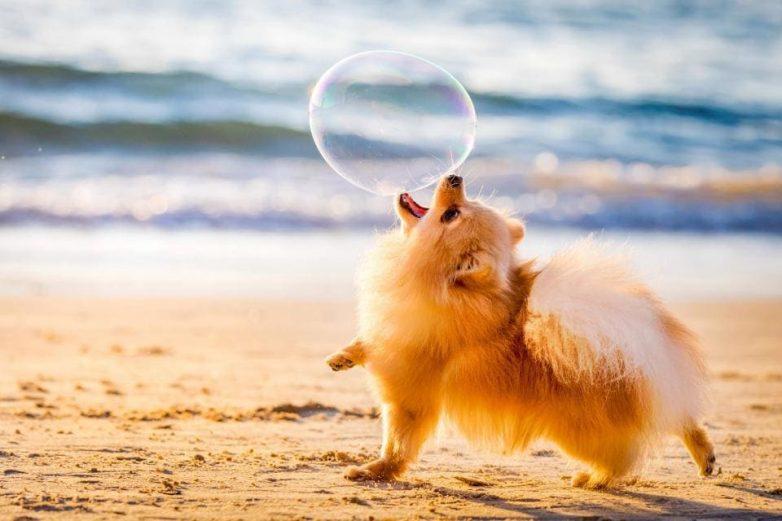 Конкурс собачьей фотографии