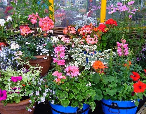 Как выбрать себе или в подарок комнатное растение, если вы не специалист-ботаник?