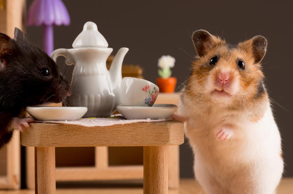 fotofeel/Shutterstock.com