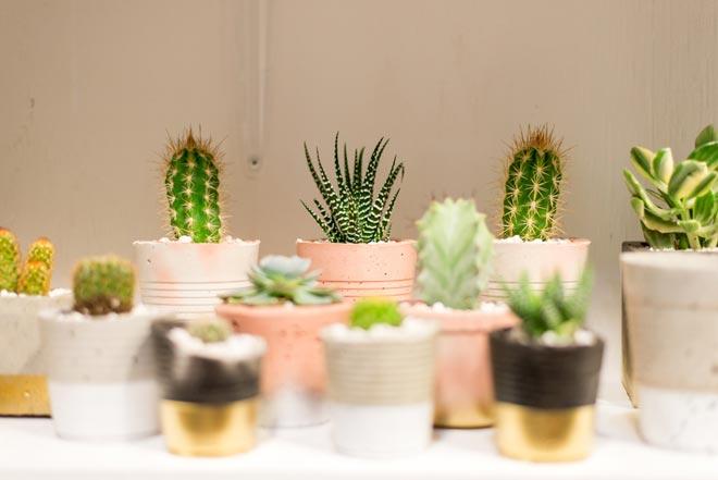 Выращивание маленьких кактус…