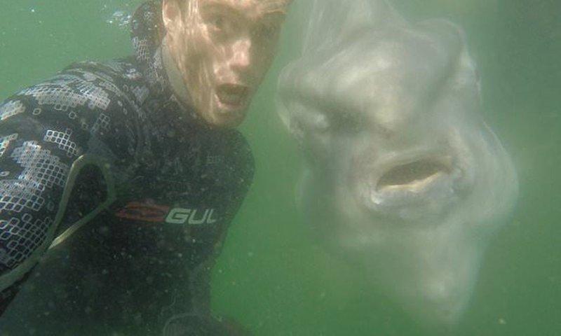 Улыбаемся и машем: гигантская рыба-солнце позирует для селфи