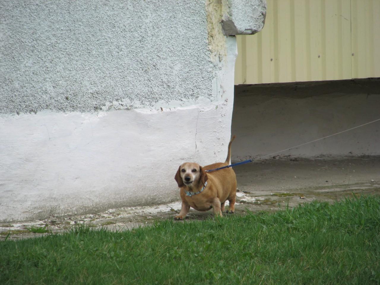 Домашние животные: Кто больше у того и больше прав