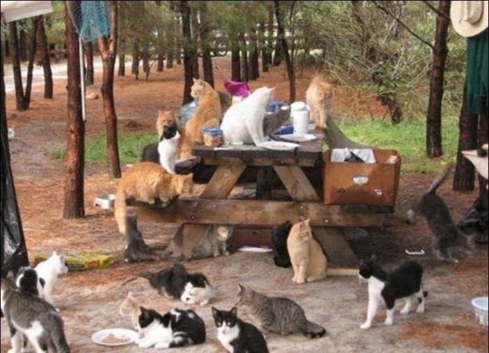 Кошачий рай своими руками