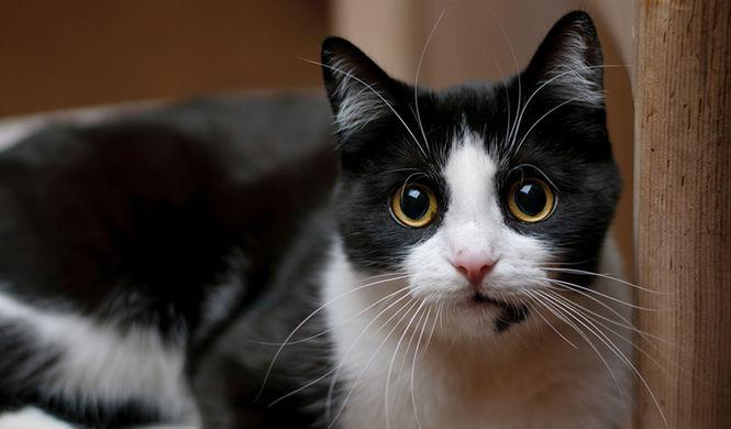 В Сети поразились способности кошек предчувствовать землетрясение