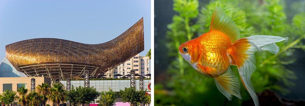 Архитектурные сооружения, вдохновлённые природой