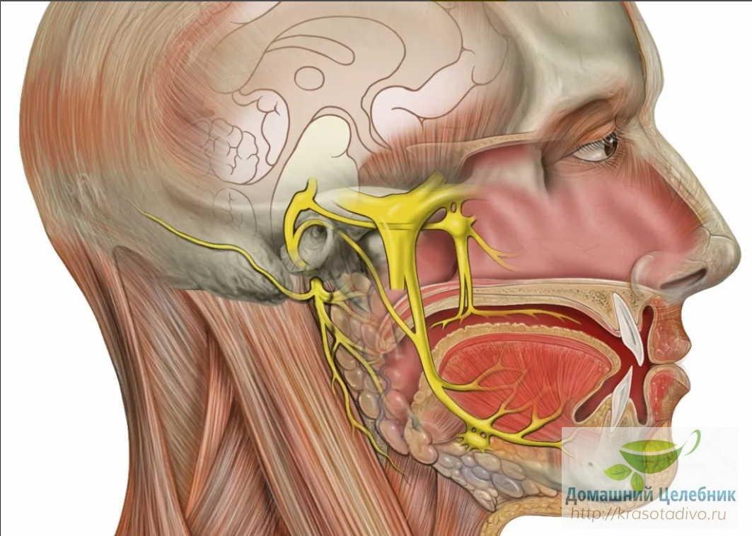 Домашнее лечение воспаления тройничного нерва — жить без боли и страданий