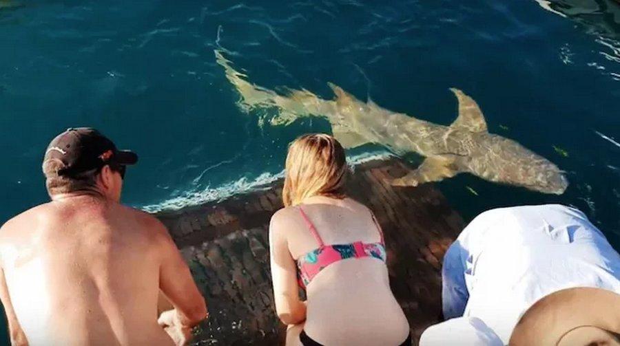 И акулы-няньки бывают кусачие