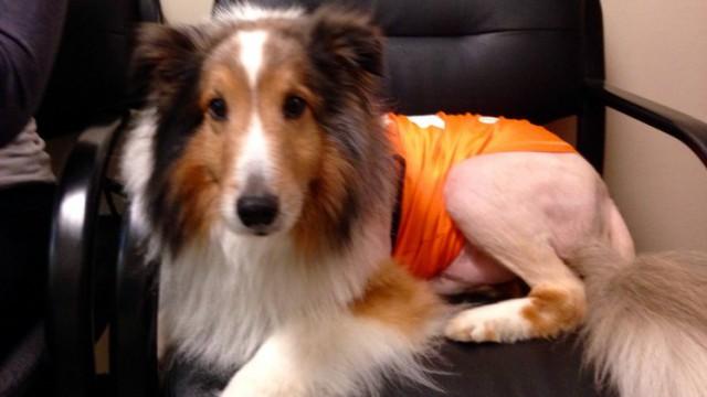 В США ветеринар–стажер спас собаку за минуту до усыпления