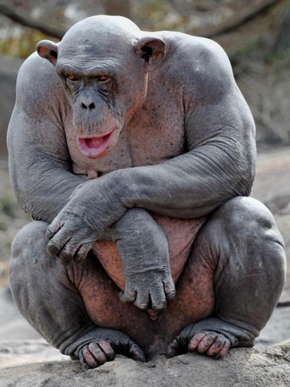 02. Шимпанзе. Животные без шерсти, Этот удивительный мир, животные