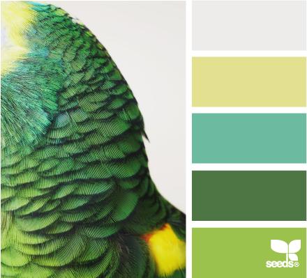 Попугай цвета