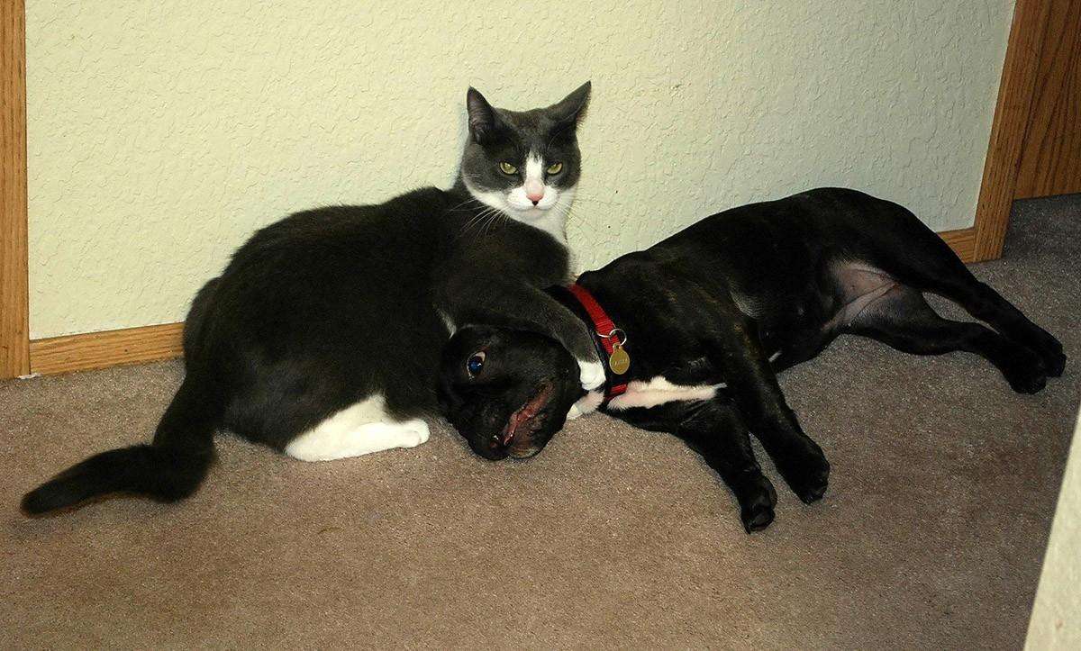lolcats09 100 лучших фотографий кошек всех времен и народов