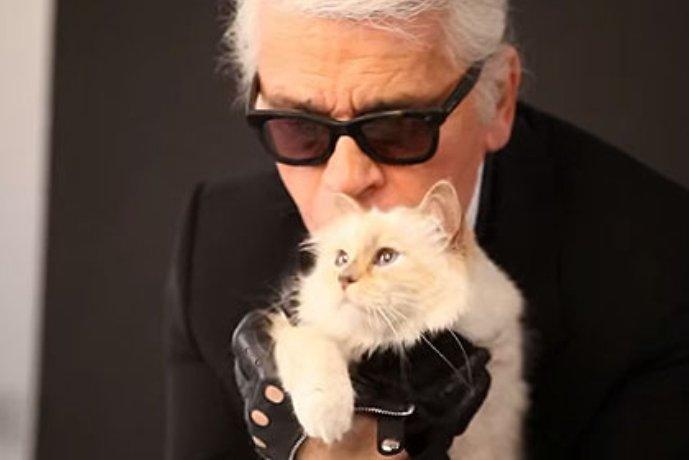 Кошка Карла Лагерфельда заработала три миллиона евро за год