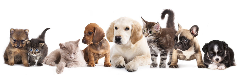 Собака приютила беременную кошку)) О взаимопомощи среди животных!)